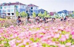 让绿色成为最动人的颜色 ——习近平总书记在浙江、安吉考察重要讲话引起强烈反响(一)